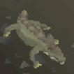 Crocodile 63