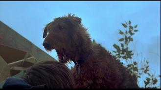 Firehouse Dog - Belch 7 Long Disgusti PE138601