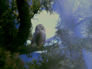 Haunted Henry Sound Ideas, BIRD, TAWNY OWL - TAWNY OWL, STRIX ALUCO, BIRD, DIGIFFECTS
