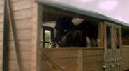 Percy Gets it Right Hollywoodedge, Bull Roar Medium Pers PE022301 2
