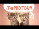Teen Titans Go! A Cat's Fancy Cat Domestic Single Meow