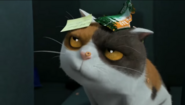 Home (2015) (Trailers) Sound Ideas, CAT - DOMESTIC: SINGLE MEOW, ANIMAL 02