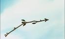 Robin Hood RICOCHET - SLICK RICCO, 01