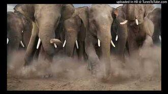 Denatoons Elephant Stampede Sound Effects-0