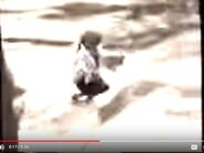 Muppet Treasure Island Trailer Hollywoodedge, Boing Wood Twang CRT016301