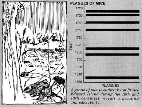 File:Mice Plague Chart.jpg