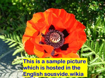 Sample picture English
