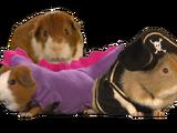 Guinea Creatures