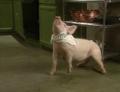 Bakin Bacon w Macon 11