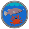Badge fishing
