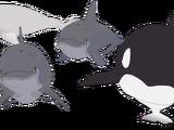 鲸鱼和海豚
