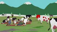 Vaca Pelirroja 12