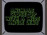 Animales de Cerca con Lente de Ángulo Amplio