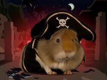 Conejillo de indias pirata