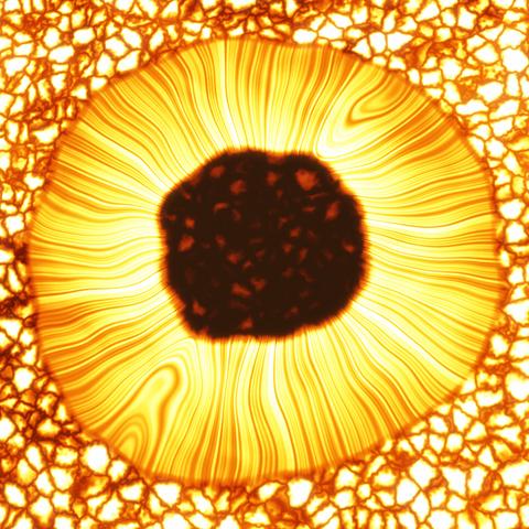 Flecken auf Proxima Centauris Oberfläche