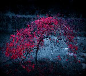 Blood-Hollow