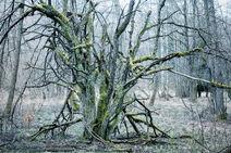Rot-Wood 2
