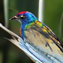 Sparkle Feather