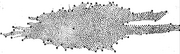 Herschel-Galaxy