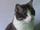 Darby Strange Cat
