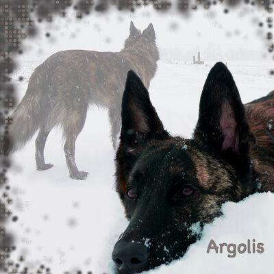 Argolispic