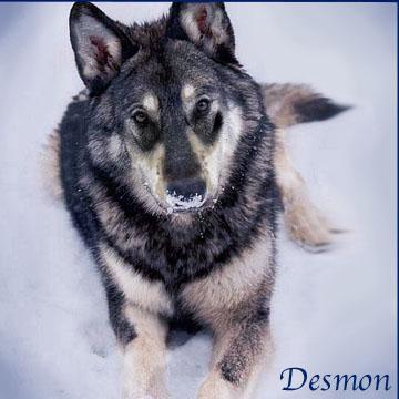 Desmon2