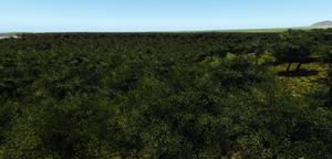 Jungles of Binding