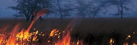 Amazon grasslands