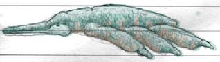 Ternumocorpidae Colored HQ