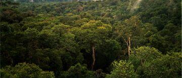 Amazon Manaus forest