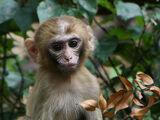 Old World Monkeys (Project Future)