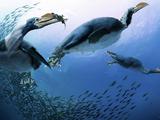 The Sea Birds-15 Million Years Later