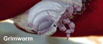 Grimworm