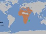 Abelisauroidea (Dinosaurs of the Ice Age)