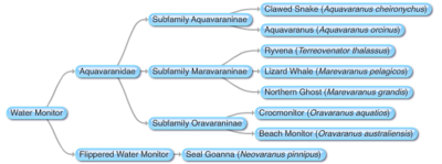 Aquavaranids