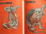 Kaiju-Anatomy