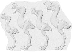 Diversité tyrannornis
