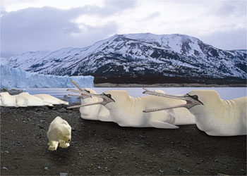 Gannetwhales snowstalker