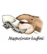 Image-representant-le-nez-de-nasoperforator-bouffoni-credits-mnhn 45682 w620