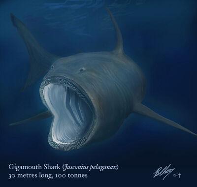 Gigamouth1
