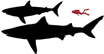 Sharksil