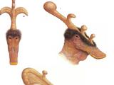 Sprintosaur