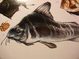 Stink-fish