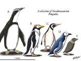 Spec Dinosauria: Sphenisciformes