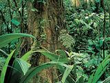 Antarctic Tropical Rainforest