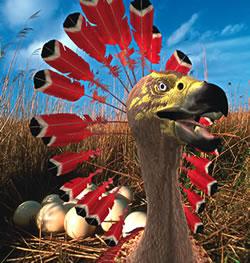 Carakiller plumage