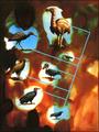 Crow evolution.png