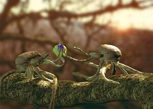 Squibbons sharing