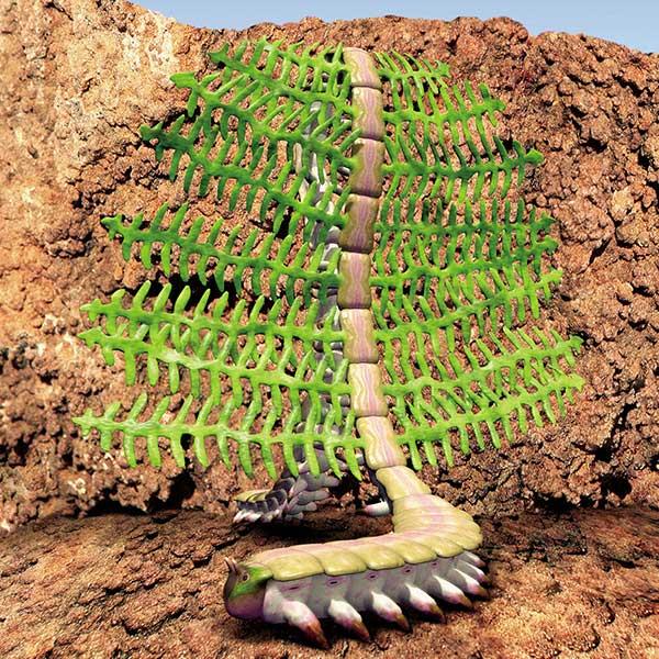 Garden worm | Speculative Evolution Wiki | FANDOM powered by Wikia