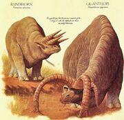 Tetraceros africanus y megalodorcas giganteus